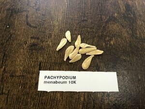 パキポディウム メナベウム 種子10粒 検)コーデックス 塊根植物 実生 パキプス グラキリス