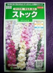 ★種子★ ストック 切り花用 早生系 混合 サカタのタネ 22.05 (ゆうパケット便可能)