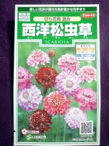 ★種子★ 西洋松虫草 切り花用 混合 サカタのタネ 22.05 ◎華やかな花が咲きます♪ (ゆうパケット便可能)