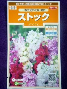 ★種子★ ストック 一本立切り花用 混合 サカタのタネ 22.05 ◎香りが強く切り花向きに改良された品種です♪ (ゆうパケット便可能)