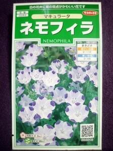 ★種子★ ネモフィラ マキュラータ サカタのタネ 22.05 ◎白の花弁に紫の斑点がかわいい花です♪ (ゆうパケット便可能)
