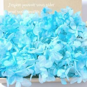 加工花材* アジサイ プリザーブドフラワー 花材