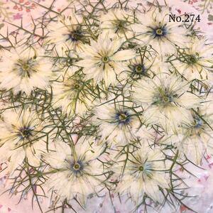 ☆new☆作家様必見☆可愛いニゲラのお花がいっぱい☆押し花セット