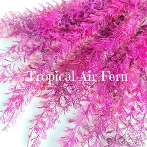 加工海藻* ピンク&パープル グラデ 9本 エアーファーン 海 ハーバリウム花材
