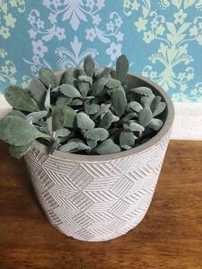 カランコエ プミラ 多肉植物 シルバー系グリーン 陶器鉢植え