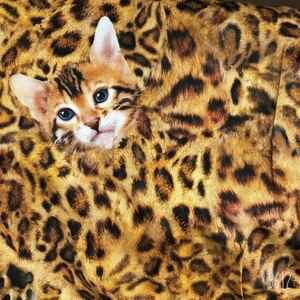 リアルプリント 猫ちゃん ベンガル 猫 ネコ 肉球 ヒョウ柄 生地 はぎれ ハンドメイド 素材