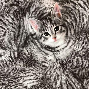 リアルプリント 猫ちゃん キジトラ 猫 ネコ 肉球 生地 はぎれ ハンドメイド 素材 アメリカンショートヘア アメショー