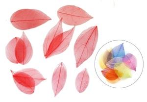 広葉樹の葉・20枚セット(赤*スケルトン)【ドライフラワー】