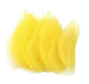 広葉樹の葉・20枚セット(黄色*スケルトン)【ドライフラワー】
