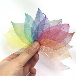 広葉樹の葉・20枚セット(マルチカラー*スケルトン)【ドライフラワー】