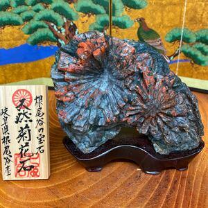 菊花石 1.18kg ★ 鑑賞石 菊花石 盆栽