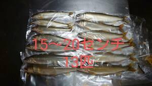 送料無料 遡上量日本一のブランド鮎 13匹 670グラム栃木県那珂川産 天然鮎 アユ あゆ