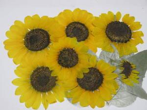 засушенный цветок материалы 4031 подсолнух