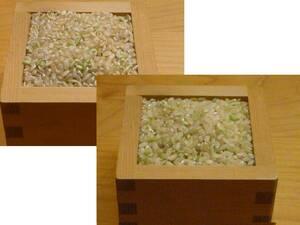 ☆発芽玄米より発芽前玄米 有機鴨作の発芽前玄米1kg ☆令和3年産新米・無農薬栽培
