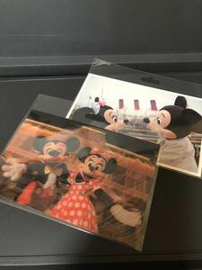 Disney 東京ディズニーランド ポストカード ■ リゾート,シー TDL ,TDS,TDR 実写,3Dポストカード【定形外送料120円】ミッキー,ミニーマウス
