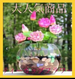 【大人気商品】ティーカップフラワー 種10粒 花の種 ガーデニング インテリア アクアリウム メダカ