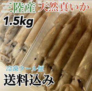 【天然真イカ】岩手県産 大容量1.5kg 天然イカ お買い得品 三陸産 産地直送 今が旬です!