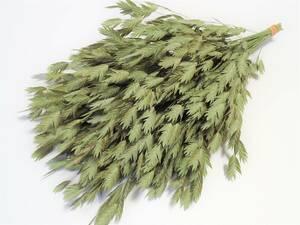 【即決】 ドライフラワー 「 ワイルドオーツ 30本 」 今年摘み取り 無着色 自然乾燥 スワッグ リース ハーバリウムなど 花材に 西洋小判草