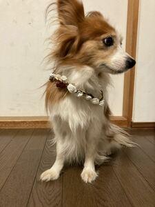 ペット首飾 犬 首輪 ホワイト