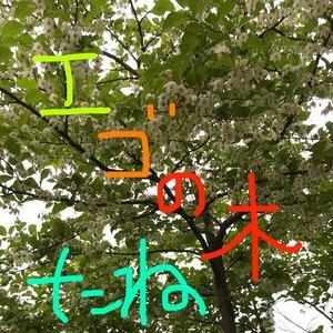 エゴの木種30粒