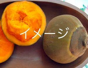 ☆★最新フルーツ★☆ チュパチュパ苗木 実生苗 1本 送料込み 激レア!!! ラスト