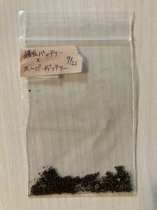 猫爪バッテリー × スーパーバッテリー 種子50粒 ギムノカリキウム Gymnocalycium vatteri サボテン