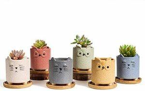 新品 T4U 植木鉢 多肉植物鉢 サボテン鉢 小型 2号鉢 可愛い猫 竹製受け皿付き 底穴付き ミニ植物適用 6点入5AB0