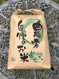 送料無料 新米 令和3年度産 玄米(精米可) 京都丹波産コシヒカリ5kg 美味しいお米