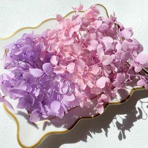 アナベル紫陽花のプリザーブドフラワー パープル ピンク ライラックカラー ドライフラワー
