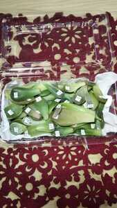 100円スタート 多肉植物 葉挿し 70種以上(全て品種名有り)+α(札落ち) ※斑入り(錦)含む