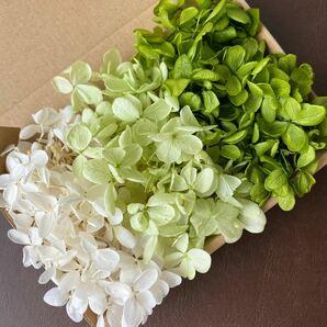 アジサイ ホワイトグリーン3カラーセット