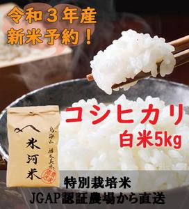 新米予約!!令和3年産 氷河米 コシヒカリ 白米5kg 山形県 庄内産 送料無料!