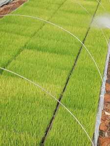 新米 令和3年度産 コシヒカリ 玄米20kg 徳島産  農家直送 減農薬米