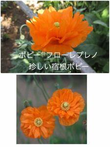 ポピー フローレプレノ 花の種