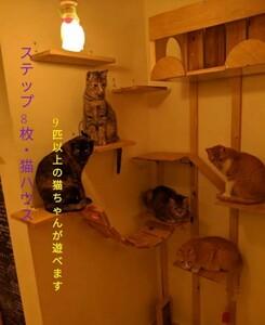 【猫カフェ】キャットタワー&猫ハウス