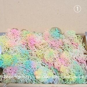 加工海藻* ①珊瑚風モス 海 ハーバリウム 花材