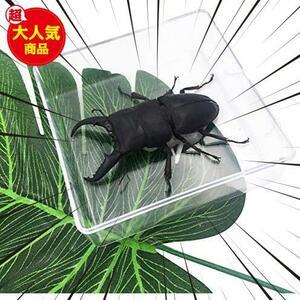 【送料無料】★色:Beetle_Stag1★ 実物大クワガタムシ 昆虫標本 子ども向け 科学STEM教育 ギフト