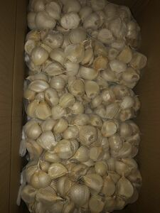 青森県産福地ホワイト大粒バラにんにく10キロ送料無料