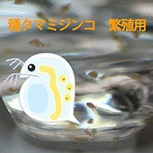 タマミジンコ 培養用 種ミジンコ 生体100匹程度 金魚・めだか・熱帯魚等の生餌 エサ 【クロレラ水 200mlに入れて発送】