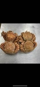 ボイル毛蟹大4尾 北海道産 送料込み大サイズ
