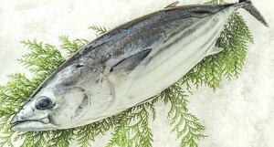 カツオ 1匹で、2.1キロ!(追加購入可能)送料一律 鮮度抜群 愛媛県豊後水道産漁師直送 他鮮魚アリ! 冷凍発送