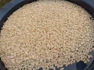新米山口県山口市阿東米 コシヒカリ玄米約1キロ 有機肥料栽培 食味優先