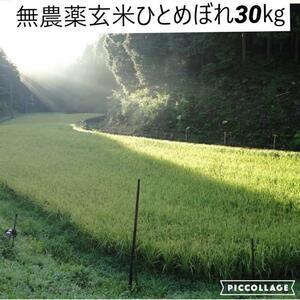 令和3年度新米【湧き水栽培】無農薬玄米ひとめぼれ 30㎏ 奈良の農家直送