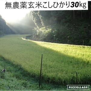 令和3年度新米【湧き水栽培】無農薬玄米こしひかり 30㎏ 奈良の農家直送