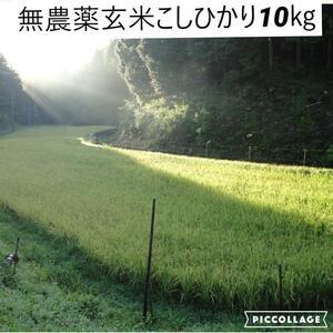 令和3年度新米【湧き水栽培】無農薬玄米こしひかり 10㎏ 奈良の農家直送