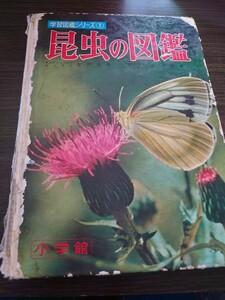 小学館 昆虫の図鑑