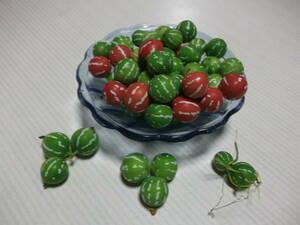 沖縄スズメウリの実(種)№2 沖縄すずめうり50個以上 緑のカーテン
