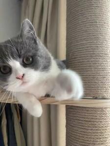 キャットタワー 猫タワー 木製 木登りタワー シングル キャットタワー 猫タワー  省スペース 全麻縄巻き 麻紐 小動物 突っ張り