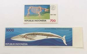インドネシア クジラ 標本 2完 未使用 NH