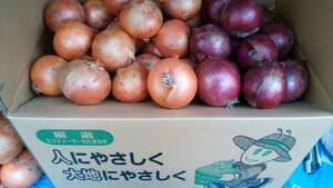 北海道産 赤玉ねぎ&玉ねぎセット Lサイズ 20kg 送料安